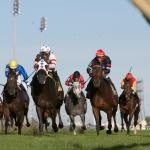 Stay Lucky Picks: Big Stakes Weekend at Woodbine