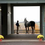 Come Meet the NEIGHbors! Two Days of Free Lexington Horse Farm Tours