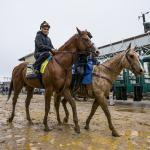 Five Questions to Be Answered in the 2018 Preakness Stakes