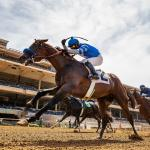 Thousand Words Stuns Honor A. P., Collusion Illusion Punches Breeders' Cup Ticket