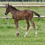 Cute Foals of the Week for May 19