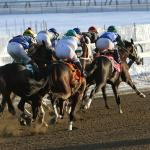 Betting the 2020 Jerome Stakes on a $20 Budget