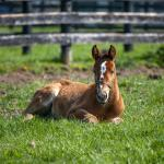 Cute Foals of the Week for May 24