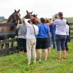 Visit Horse Country: The Unparalleled Legacy of Claiborne Farm