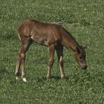 Cute Foals of the Week for Jan. 22