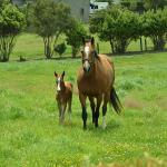 Cute Foals of the Week for April 22