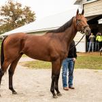 Hangin' With Haskin: The Inspiration of American Pharoah