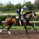 Behind the Scenes With Exercise Rider Arianna Spadoni