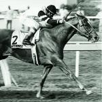 Affirmed: Rare Talent, Rare Competition