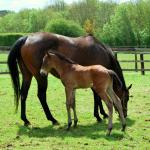 Cute Foals of the Week for April 1
