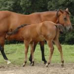 Cute Foals of the Week for May 5