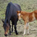 Cute Foals of the Week for Feb. 11