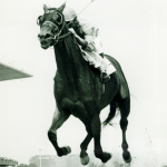 Buckpasser: The Nonchalant Champion