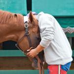 Twenty-Six Horse Hugs for National Hugging Day