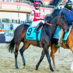 Keying Longshot Cloud Computing in the Preakness
