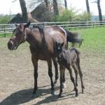 Cute Foals of the Week: Feb. 25, 2020