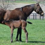 Cute Foals of the Week for May 20: Post-Preakness Edition