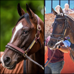 SLIDESHOW: Meet the 2019 Breeders' Cup Distaff Contenders