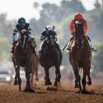 Stellar Wind's Connections Looking Forward to Rematch With Beholder