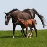 Cute Foals of the Week for Feb. 3