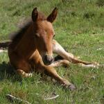 Cute Foals of the Week for Jan. 20