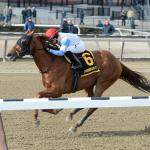 Three Live Longshots to Consider in the Belmont Stakes