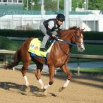 Five Intriguing Longshots Worth a Second Look in the Kentucky Derby