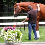 Three Ways Grayson-Jockey Club is Helping Horses on Giving Tuesday