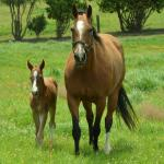 Baby Names and Meanings Inspired by Horses
