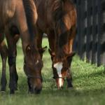Horse Country Launches Passport Program