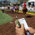Los Ponies Longshots: Price Plays on the Downhill Turf