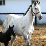 Cute Foals of the Week for March 18