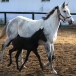 Cute Foals of the Week for Jan. 8