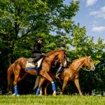 Preakness Wide Open in a Year With No Standout