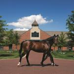 Visit Horse Country: Godolphin's Tradition of Excellence at Jonabell Farm