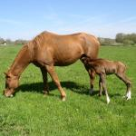 Cute Foals of the Week for April 23