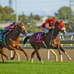 El Tormenta Rallies to 44-1 Upset in Woodbine Mile