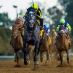Knicks Go Adds Intrigue to Breeders' Cup Juvenile Puzzle