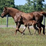 Cute Foals of the Week for May 10