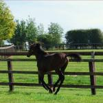 Cute Foals of the Week for June 14