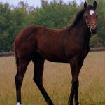 Cute Foals of the Week for Jan. 13
