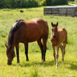 Cute Foals of the Week for June 3