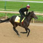 Three Heating Up, Three Cooling Down: 2017 Kentucky Derby Edition