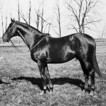 Remembering Man o' War on the 100th Anniversary of His Birth