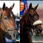 SLIDESHOW: Meet the 2020 Breeders' Cup Distaff Contenders
