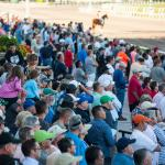 Looking for Hints of Potential When Betting Young Racehorses