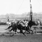Nashua: A Classic Racehorse