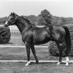 Northern Dancer: The Patriarch Stallion