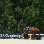 Your Retired Racehorse Training Questions, Answered: Getting Started with an OTTB