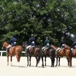 Your Retired Racehorse Training Questions, Answered
